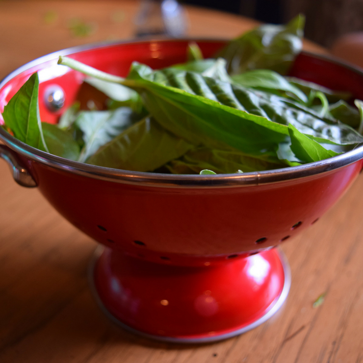 fresh basil leaves in a small red collander